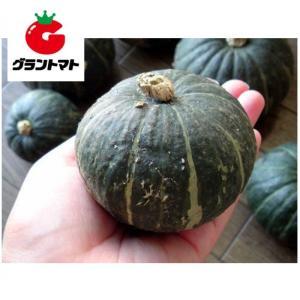 坊ちゃん南瓜 100粒 野菜種子【かぼちゃ カボチャ】【取寄商品】 grantomato