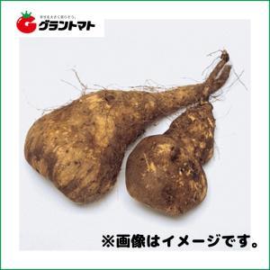 姫神芋種子 800g 太短形種長いも|grantomato