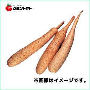 ねばり芋種子 600g 短形長いも|grantomato