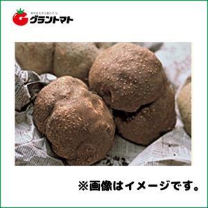 山の芋種子 500g ツクネイモ|grantomato
