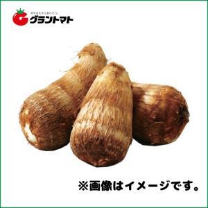 土垂れ芋種子 1kg さといも|grantomato