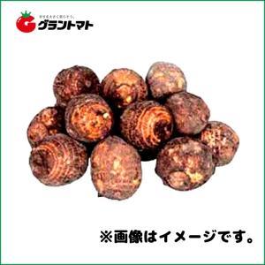 石川早生芋種子 800g さといも極早生種|grantomato