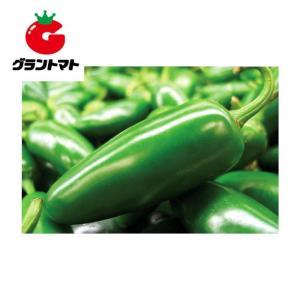 ハラペーニョとうがらし 20ml 野菜種子【取寄商品】 grantomato
