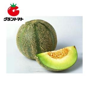 アムスメロン 100粒 野菜種子【取寄商品】【ゆうパケット可】 grantomato