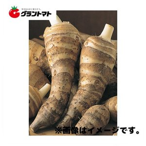 唐の芋(海老芋(えびいも))種子 500g さといも|grantomato