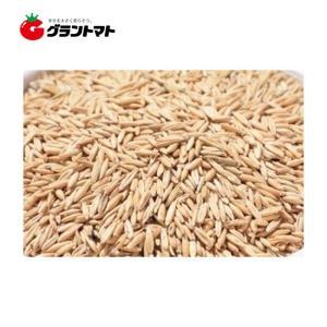 ペット用えん麦(未消毒) 1kgえん麦種子 【取寄商品】 grantomato