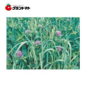 ナツユウ(Rh) 500g アカクローバ種子 【取寄商品】【ゆうパケット可】 grantomato