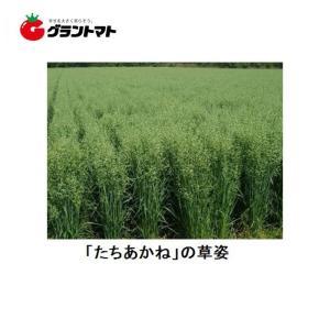 たちあかね 1kg えん麦種子 【取寄商品】 grantomato