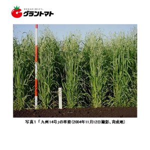 九州14号 1kg えん麦種子 【取寄商品】 grantomato