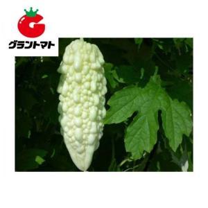 純白ゴーヤ 1L 野菜種子【にがうり ニガウリ】【取寄商品】 grantomato