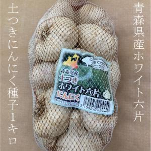ホワイト六片ニンニク種子 1kg 土つきサイズ混合 【青森県産】 grantomato