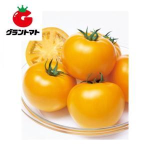 桃太郎ゴールド トマト 1000粒 野菜種子【とまと】【取寄商品】 grantomato