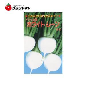 ホワイトムーン 小袋 カブ種子 アサヒ交配【ゆうパケット可】 grantomato
