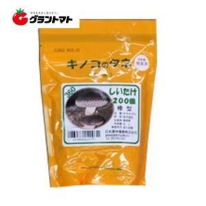 椎茸すその360 200コマ きのこ種菌 日本農林種菌|grantomato