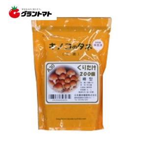 くりたけ日農A30 200コマ きのこ種菌 日本農林種菌|grantomato