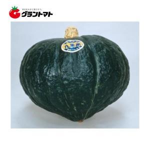 メール便 カネコ種苗 かぼちゃ 九重栗 野菜の種 1袋の商品画像 ナビ