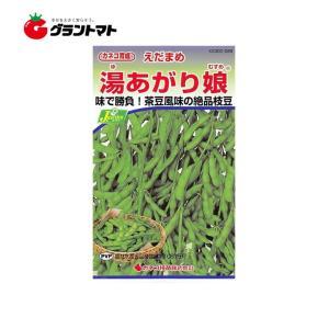 メール便 カネコ種苗 枝豆 エダマメ 湯あがり娘 野菜の種 1袋(40ml)の商品画像|ナビ