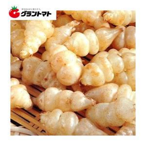 チョロギ 10球 J-10 野菜球根 (販売期間: 2月中旬〜)|grantomato