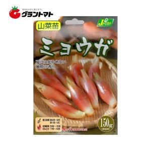 野菜球根 ミョウガ 150グラム カネコ種苗|grantomato
