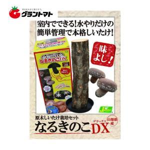 原木しいたけ栽培セット  なるきのこDX(しいたけ)|grantomato