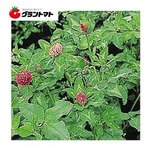 メジウム 500g アカクローバ種子 【取寄商品】【ゆうパケット可】 grantomato