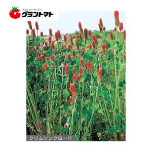 クリムソンクローバー 500g  クローバー種子 【取寄商品】【ゆうパケット可】 grantomato