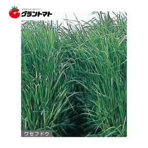 ワセフドウ イタリアンライグラス種子 1kg 【取寄商品】 grantomato