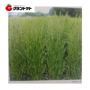 ワセホープ イタリアンライグラス種子 1kg【取寄商品】 grantomato