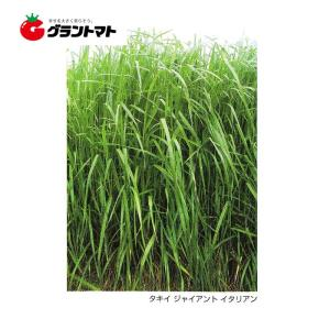 ジャイアントイタリアン イタリアンライグラス種子 1kg【取寄商品】 grantomato