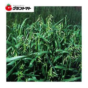 前進 1kg えん麦種子 【取寄商品】 grantomato
