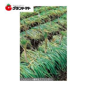 極早生スプリンター 1kg えん麦種子 【取寄商品】 grantomato
