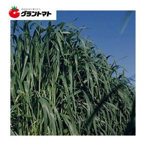 アムリII 1kg えん麦種子 【取寄商品】 grantomato