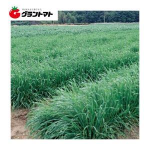 ネグサレタイジ 1kg えん麦種子 【取寄商品】 grantomato