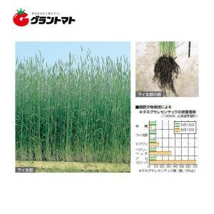 ライ太郎 1kg らい麦種子 【取寄商品】 grantomato