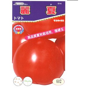 サカタ交配麗夏は、畑で赤く熟してから収穫する王様トマトです。 王様トマトは、サカタのタネの作った赤熟...