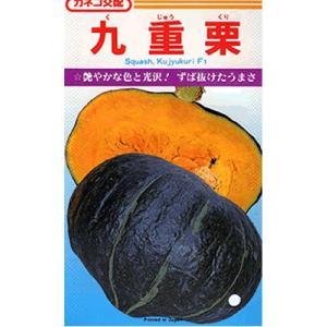 カボチャ種 カネコ交配・・・九重栗・・・<カネコのカボチャ品種です。 種のことならお任せグリーンデポ>|green-depo-1