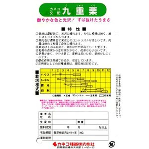 カボチャ種 カネコ交配・・・九重栗・・・<カネコのカボチャ品種です。 種のことならお任せグリーンデポ>|green-depo-1|02