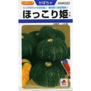 カボチャ タキイ交配・・・ほっこり姫・・・<タキイのミニカボチャです。 種のことならお任せグリーンデポ>|green-depo-1