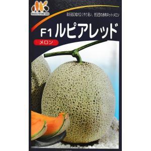 メロン種 みかど交配・・・ルピアレッド・・・<みかど協和のネットメロンです。 種のことならお任せグリーンデポ>|green-depo-1