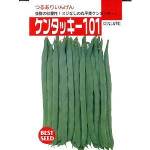 インゲン タキイ・・・ケンタッキー101・・・<タキイのつるありインゲンです。 種のことならお任せグリーンデポ>|green-depo-1