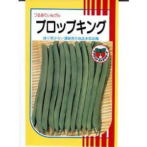 インゲン サカタ・・・プロップキング・・・<サカタのつるありインゲンです。 種のことならお任せグリーンデポ>|green-depo-1