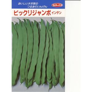 インゲン種 みかど協和・・・ビックリジャンボ・・・<みかど協和のつるありインゲンです。 種のことならお任せグリーンデポ>|green-depo-1