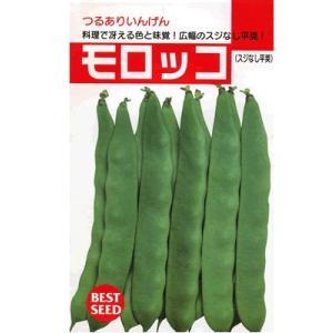 インゲン タキイ・・・モロッコ・・・<タキイのつるありインゲンです。 種のことならお任せグリーンデポ>|green-depo-1