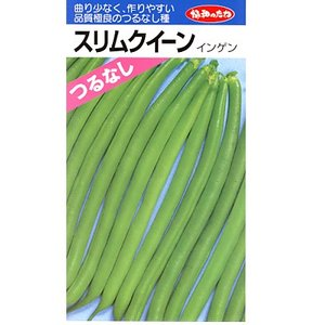 インゲン種 みかど協和・・・スリムクイーン・・・<みかど協和のつるなしインゲン品種です。 種のことならお任せグリーンデポ>|green-depo-1