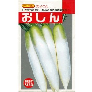 ダイコン タキイ交配・・・おしん・・・<タキイのダイコンです。 種のことならお任せグリーンデポ> green-depo-1