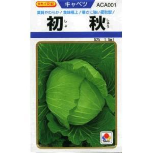 キャベツ タキイ交配・・・初秋・・・<タキイのキ...の商品画像