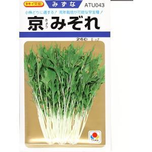 タキイ交配 京みぞれ    タキイ種苗の水菜品種です。 種のことならお任せグリーンデポ|green-depo-1