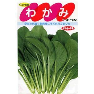 小松菜 サカタ交配・・・わかみ・・・<サカタの小松菜です。 種のことならお任せグリーンデポ>|green-depo-1