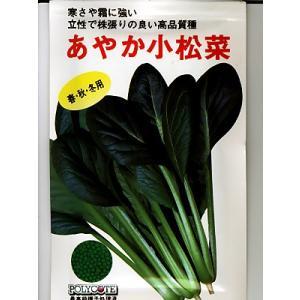 小松菜 野原交配・・・あやか・・・<野原の小松菜です。 種のことならお任せグリーンデポ>|green-depo-1