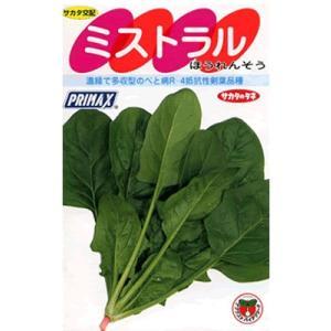 ほうれん草 サカタ交配・・・ミストラル・・・<サカタのほうれん草です。 種のことならお任せグリーンデポ>|green-depo-1